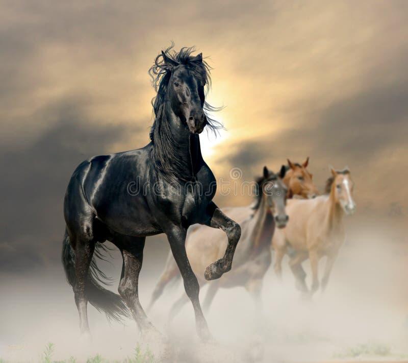 Black stallion royalty free stock photos