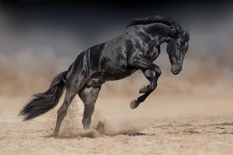 Black stallion run. Black stallion with long mane run gallop in sand royalty free stock photo