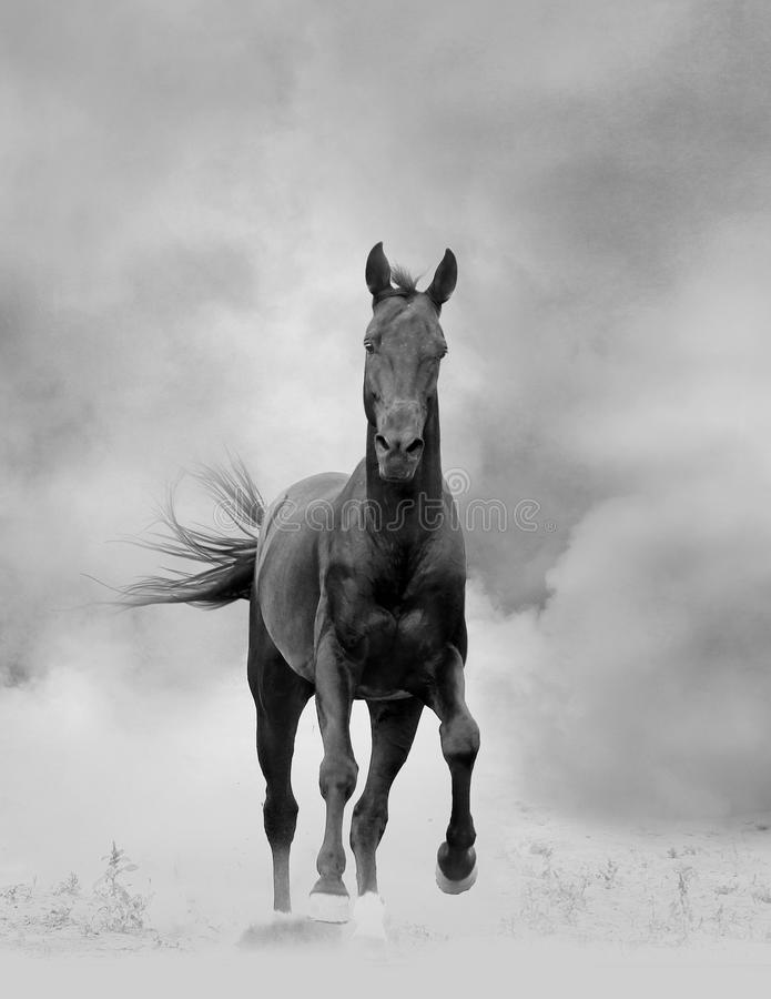 Black Stallion Stock Photo