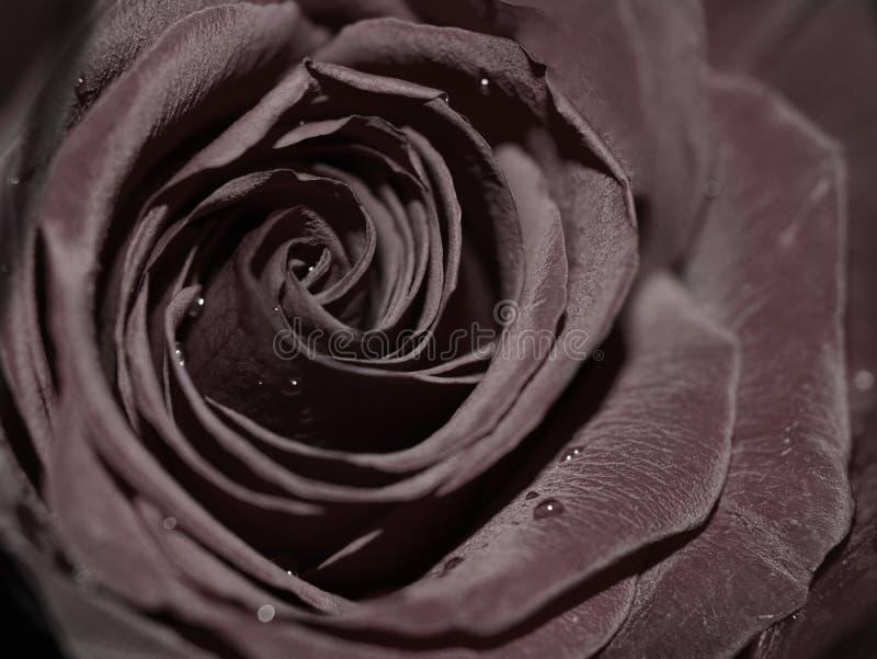 black steg royaltyfri fotografi