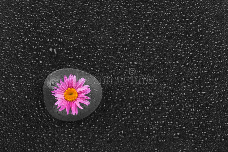 Download The Black Stone With A Flower Stock Photo - Image: 33773736