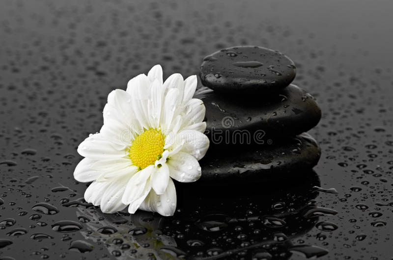Download Black Stones And White Flower With Water Drops Stock Image - Image: 31944625