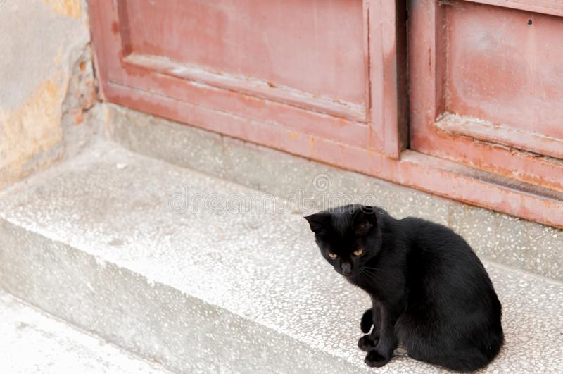 Black street cat. Black street cat in focus stock photos