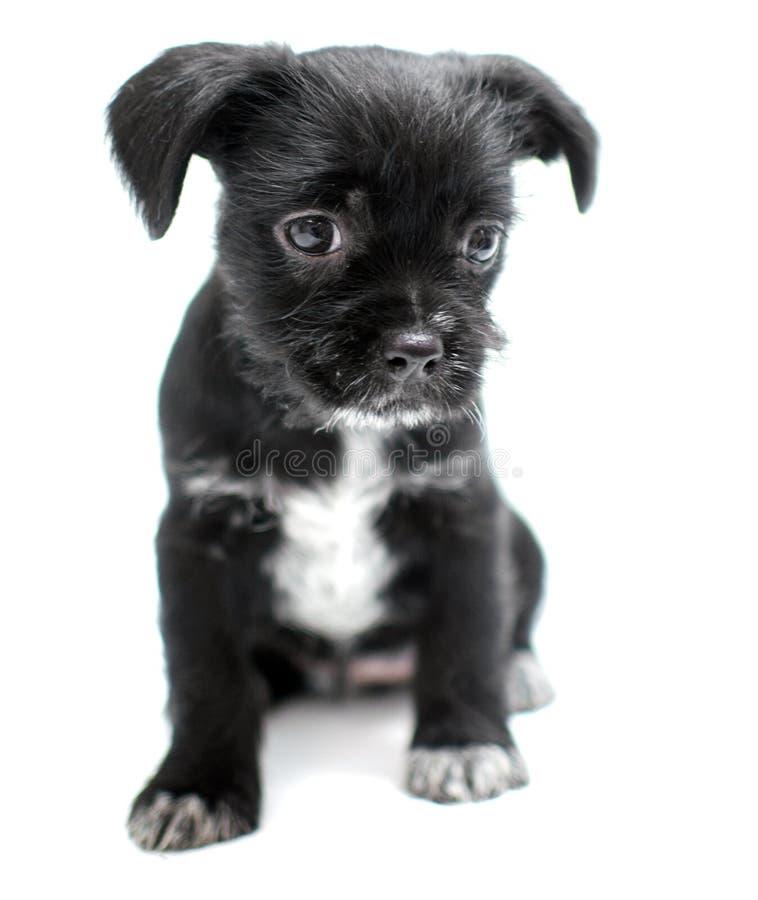 560 Scruffy Puppy Photos - Free & Royalty-Free Stock ...