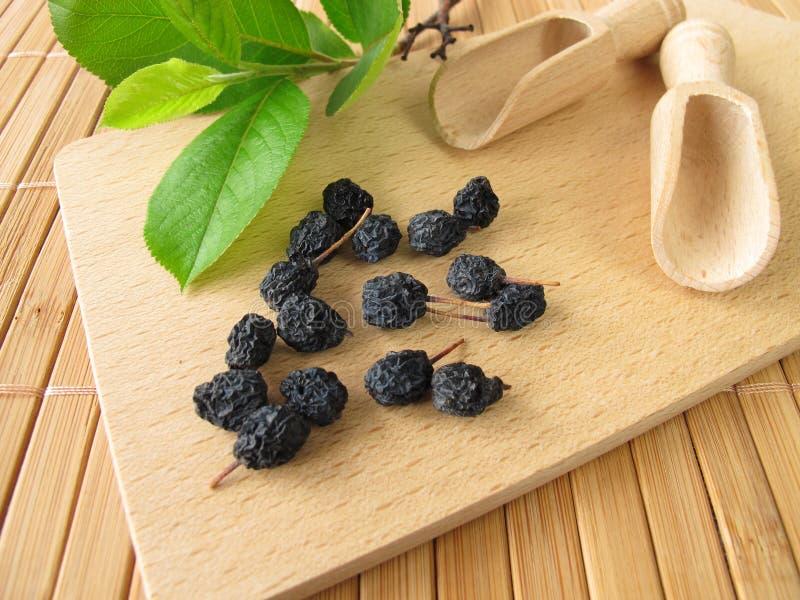 black torkade chokeberries royaltyfria foton