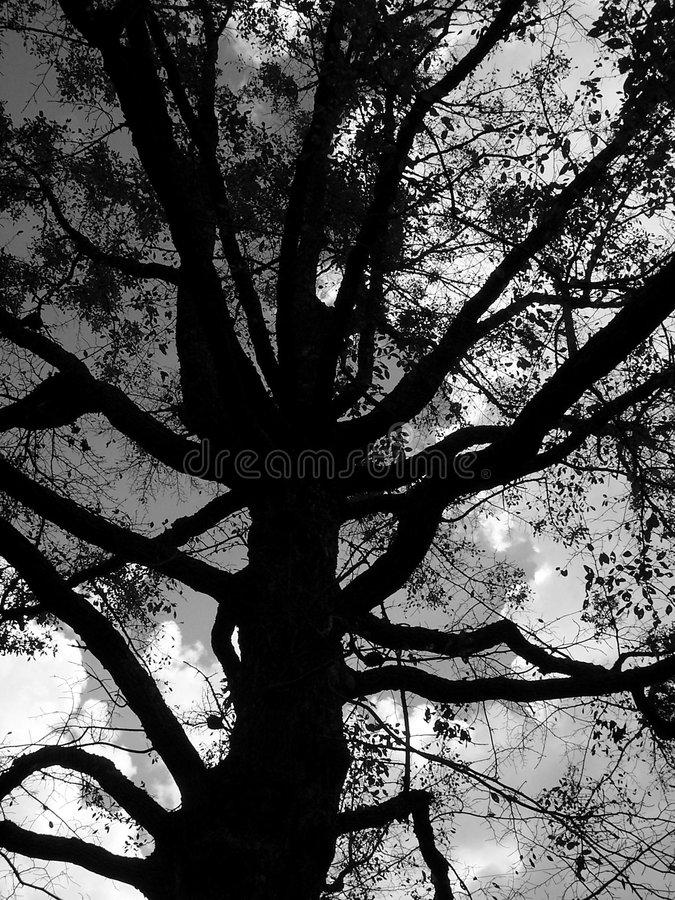 Black Tree Stock Photos