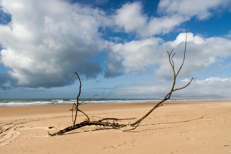 Black Tree Branch on Seashore Under White Clouds stock photos