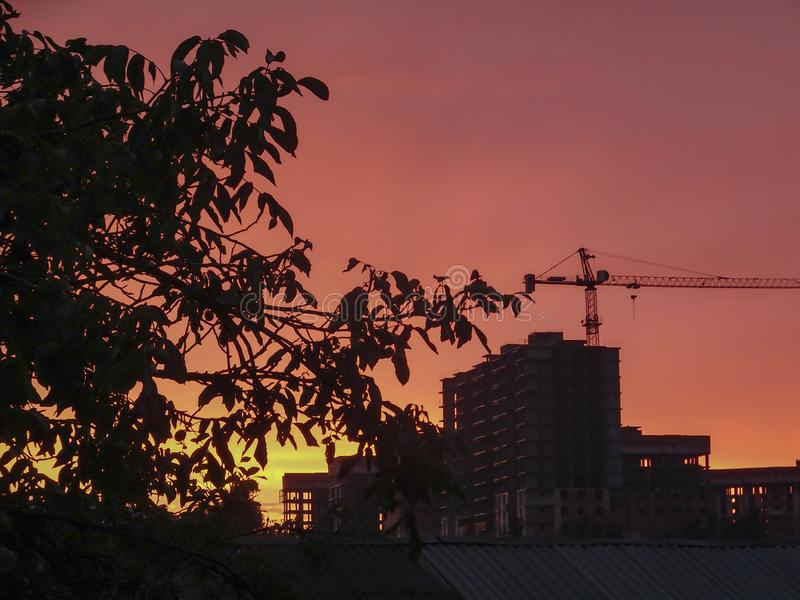 Black tree silhouettes with leaves and buildings under construction with tower cranes on a background of orange-red sky at sunset. City view silhouettes at stock photography