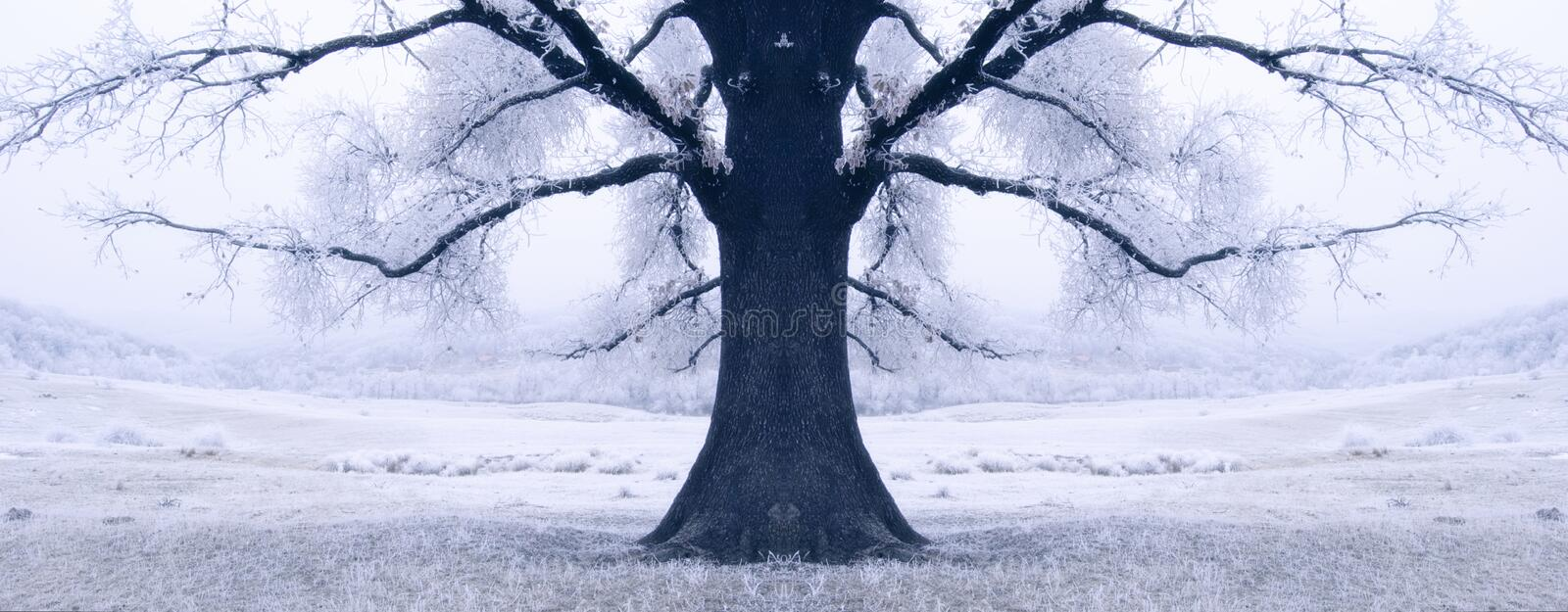 Black tree surrounded by snow in winter royalty free stock photo