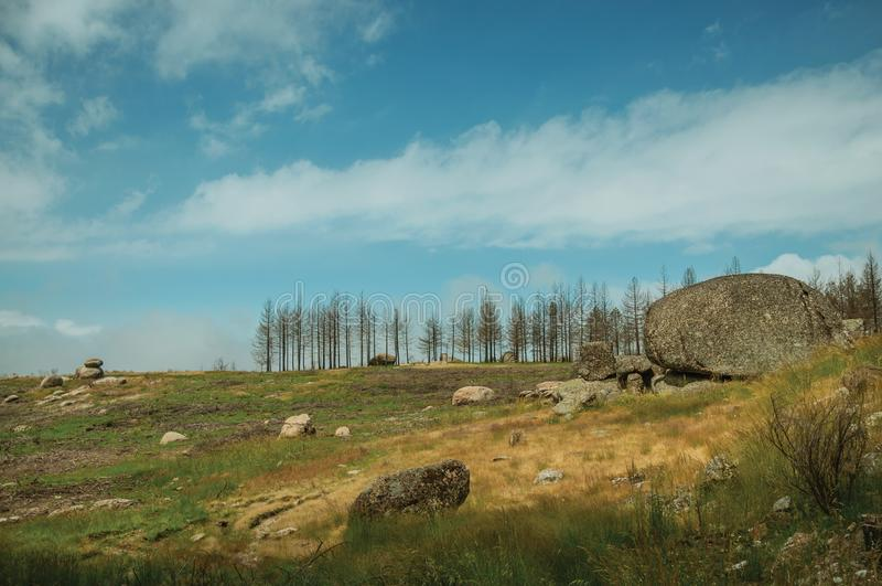Black trees in a burnt forest on rocky landscape. Black trees in a burnt forest over green fields with bushes and rocky landscape, in a cloudy day at the Serra stock image