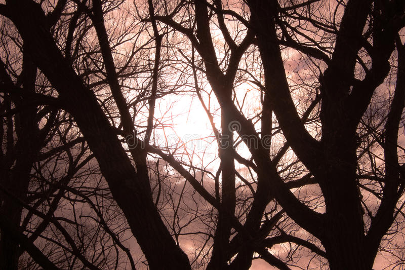 Black trees in front of sunlight royalty free stock photo
