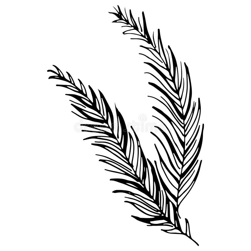 Black tropical leaves on white background. Silhouette palm leaves. Vector graphic illustration. Hand drawn style illustration. royalty free illustration