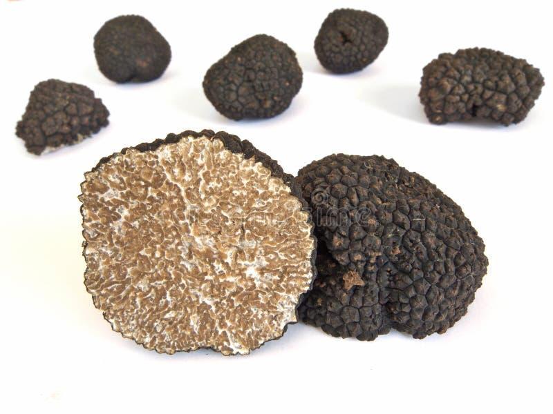 Black truffles. Isolated on white stock photo