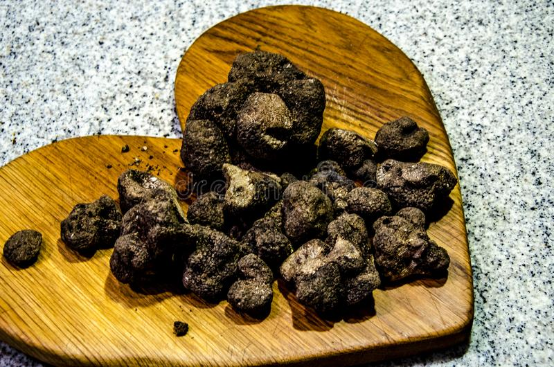Black truffles. A freshly dug up culinary gastronomic delicacy, black truffles in Abruzzo, italy royalty free stock images