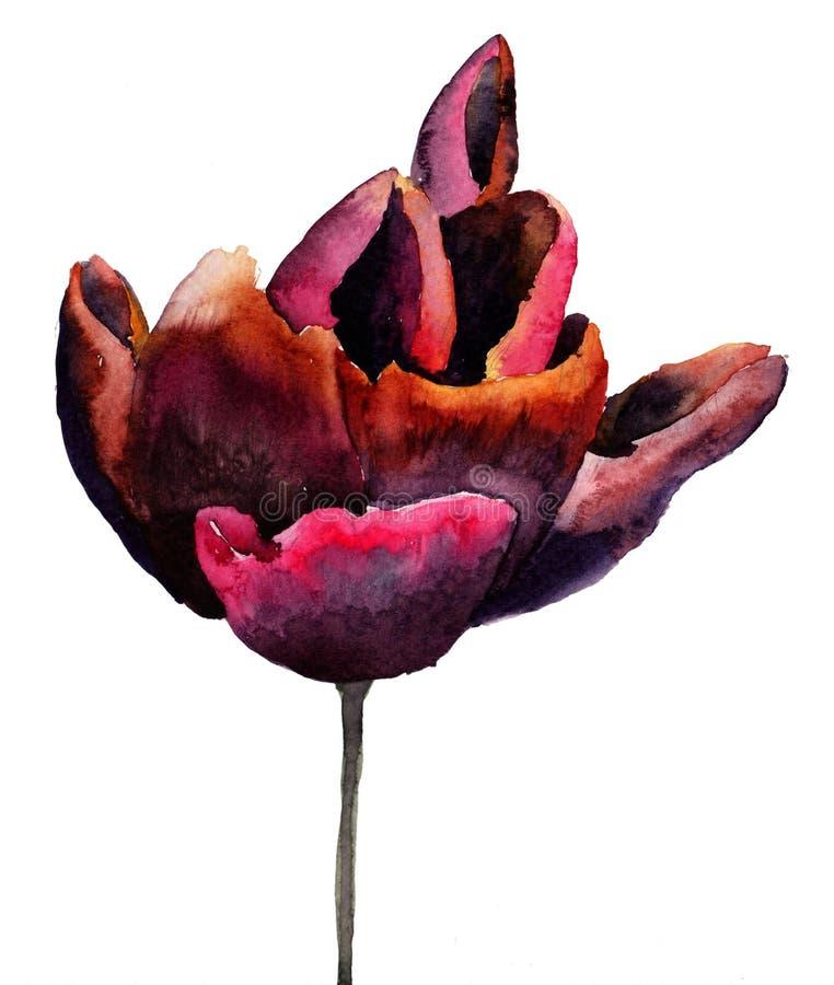 Download Black Tulip flower stock illustration. Illustration of painting - 28639601