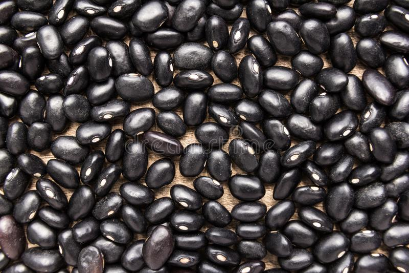 Black Turtle Bean legume. Closeup of grains, background use. Phaseolus vulgaris is scientific name of Black Turtle Bean legume. Also known as Frijoles Negros stock images