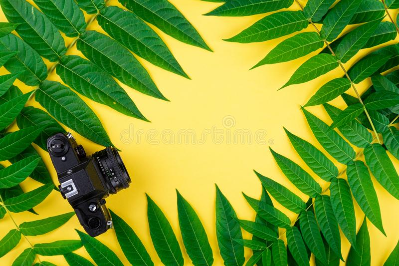 Black vintage retro photo film camera, abstract frame border of tropic green leaves on yellow background royalty free stock photography