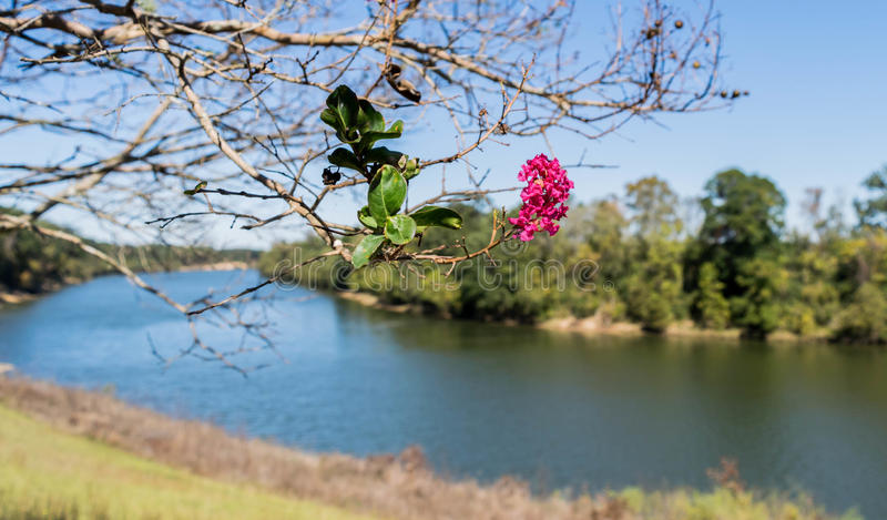 Black Warrior River, near Moundville, Alabama, USA. Black Warrior River curves into the bend near Moundville, Alabama, USA. Spring flowers in bloom on nearby royalty free stock photography