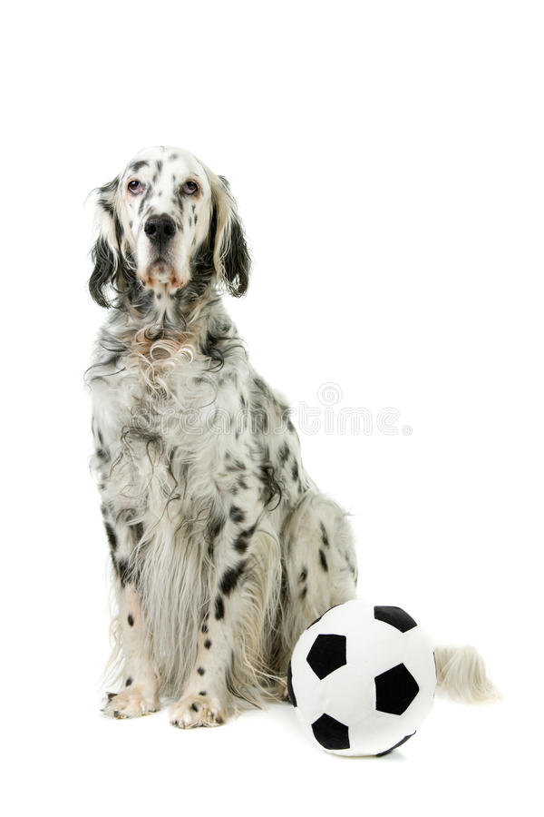 Download Black and white stock photo. Image of animal, soccer - 14602718