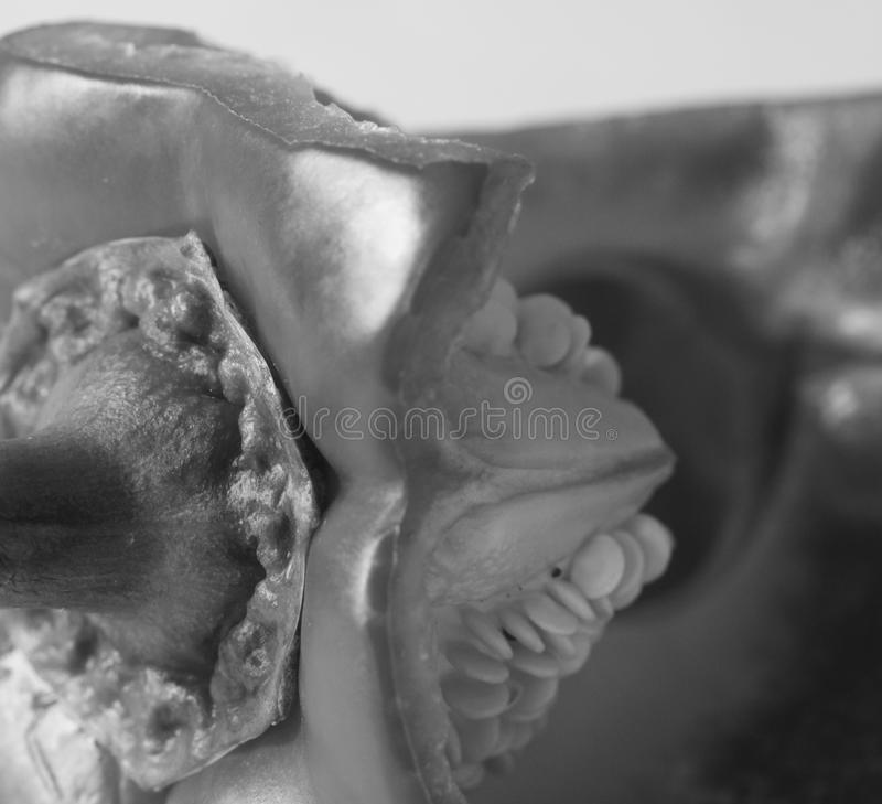A black and white abstract photograph of a red pepper inside. A black and white abstract photograph of the inside of a red pepper showing hexagonal shape and stock images