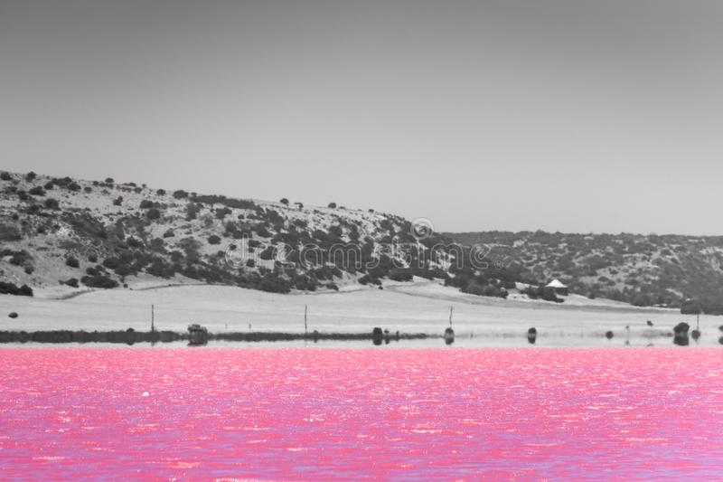 Black, White and accent color of Pink lake next to Gregory in Western Australia in front of desert. Black, White and accent color of Pink lake next to Gregory in stock images