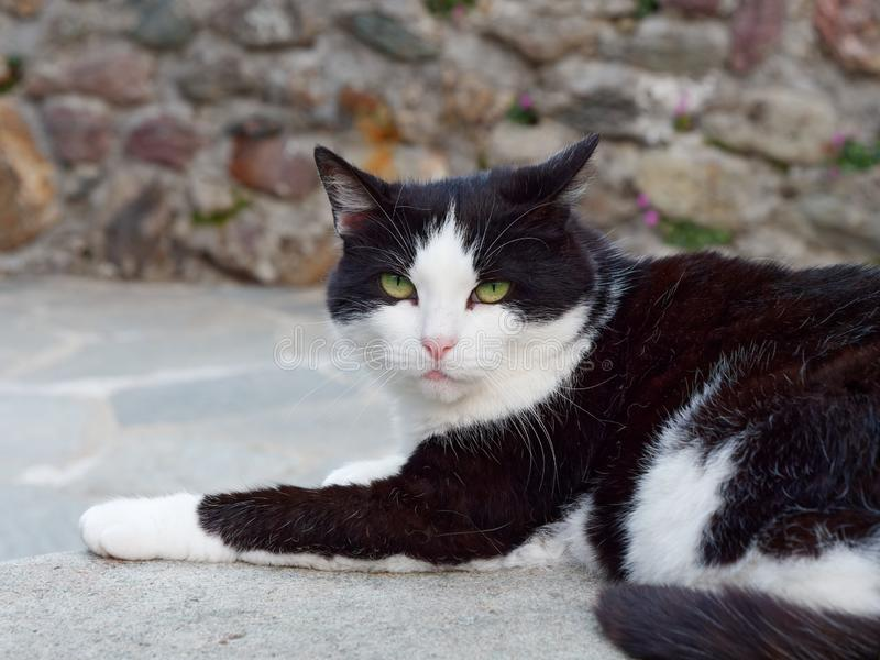 Black and white cat on a street of a mountain italian village royalty free stock image