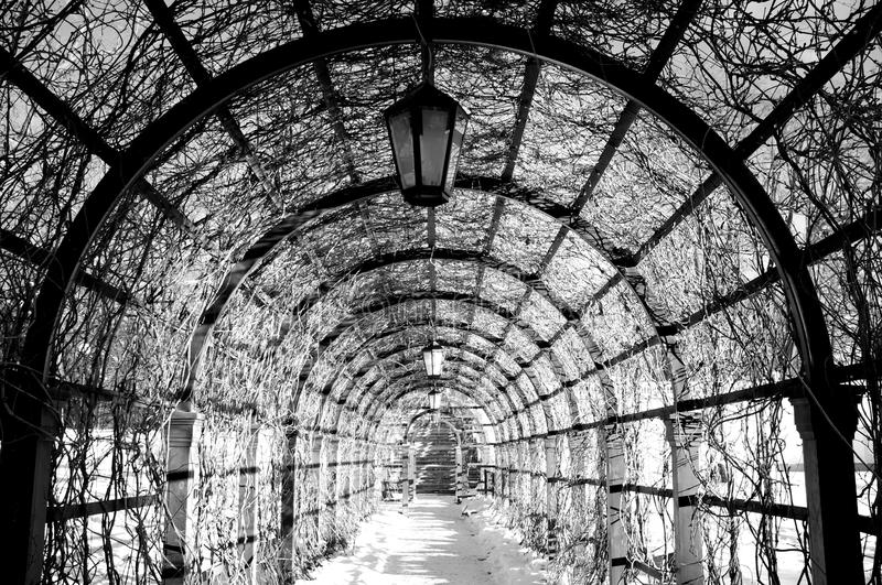 Download Black And White  Archway In A Winter Park Stock Photo - Image: 25165866