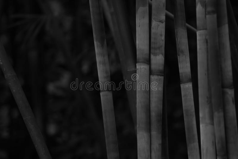 Black and White Bamboo stems, close up view, vertical stock image