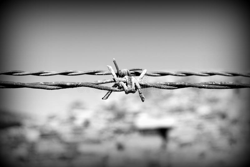 Barbed wire black and white stock image of macro