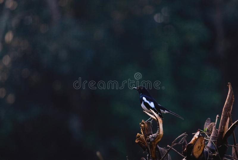 Black And White Bird Perched On Branch Free Public Domain Cc0 Image