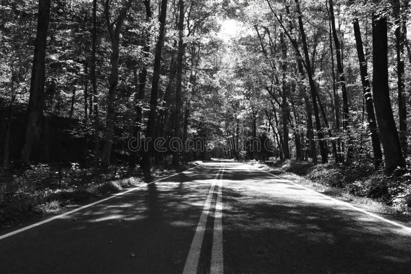 Black&White στοκ φωτογραφίες με δικαίωμα ελεύθερης χρήσης