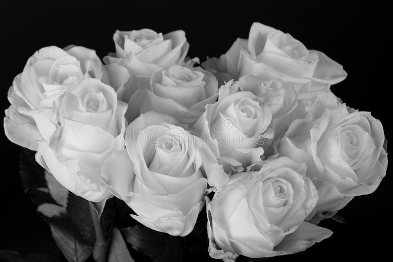Download black and white bouquet of white roses over black stock image image of beauty