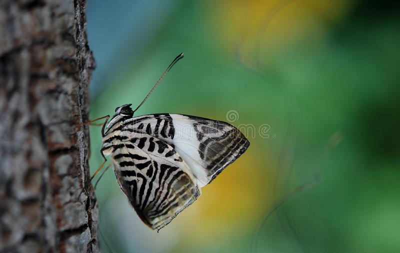 Black and white butterfly stock images