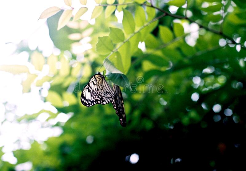Black And White Butterfly On Brown Tree Branch Free Public Domain Cc0 Image