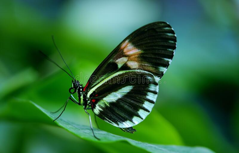 Black And White Butterfly On Green Leaf During Daytime Free Public Domain Cc0 Image