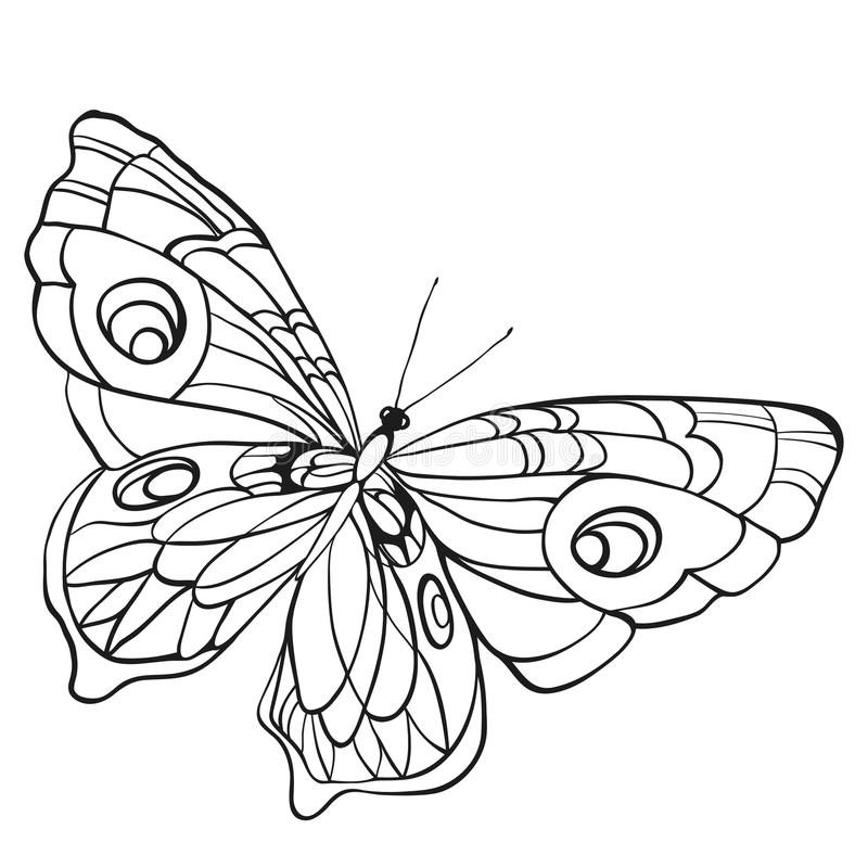 Black and white butterfly with open wings in a top view vector illustration