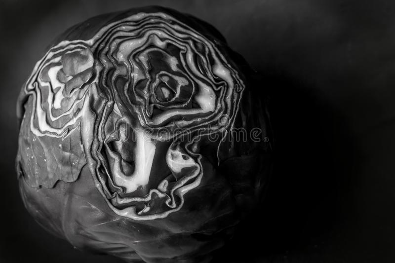 Black and white cabbage royalty free stock images
