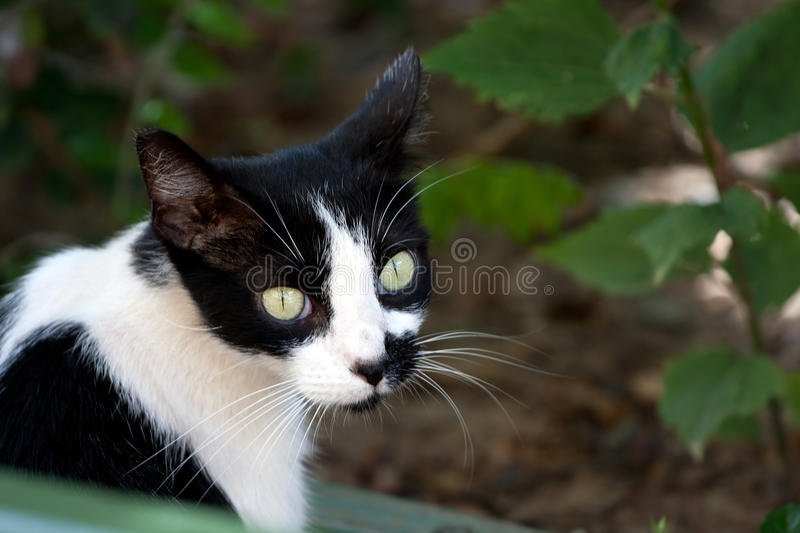 Download Black And White Cat Stock Images - Image: 18291624