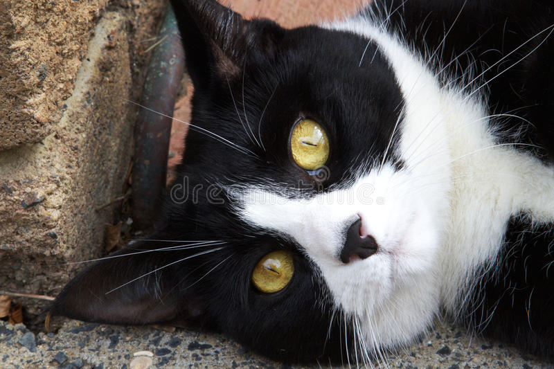 Download Black and white cat stock image. Image of eyes, funny - 18845341