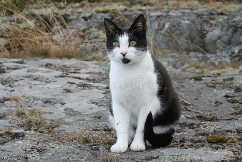 Black and white cat stock photo