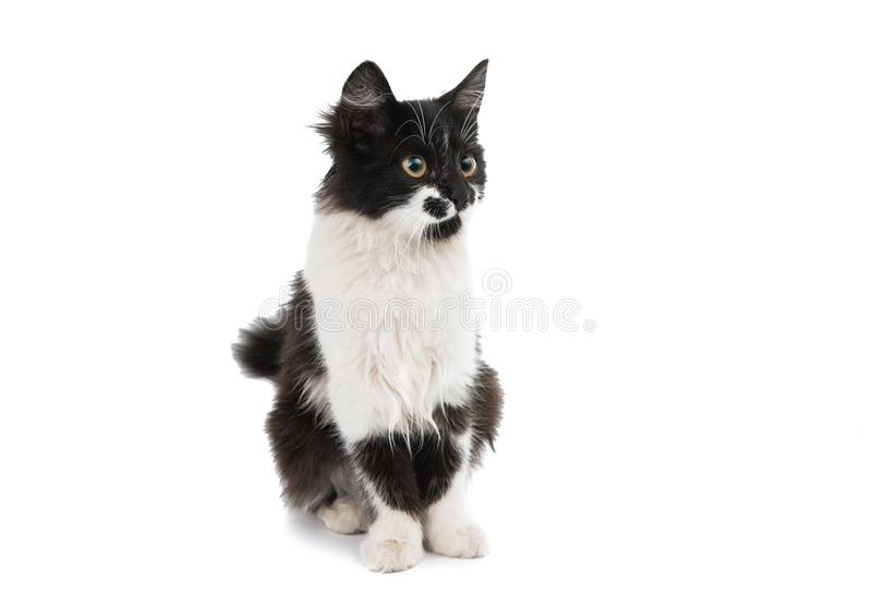 Black and white cat. On a white background stock images