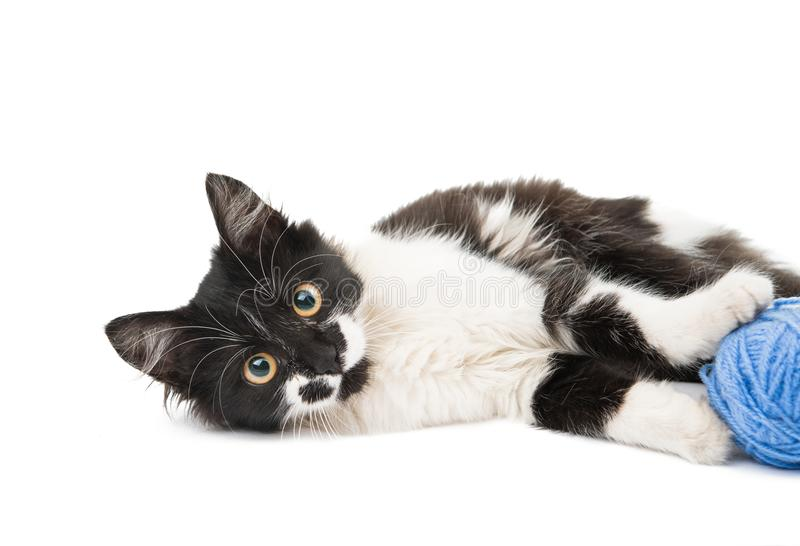 Black and white cat. On a white background royalty free stock photos