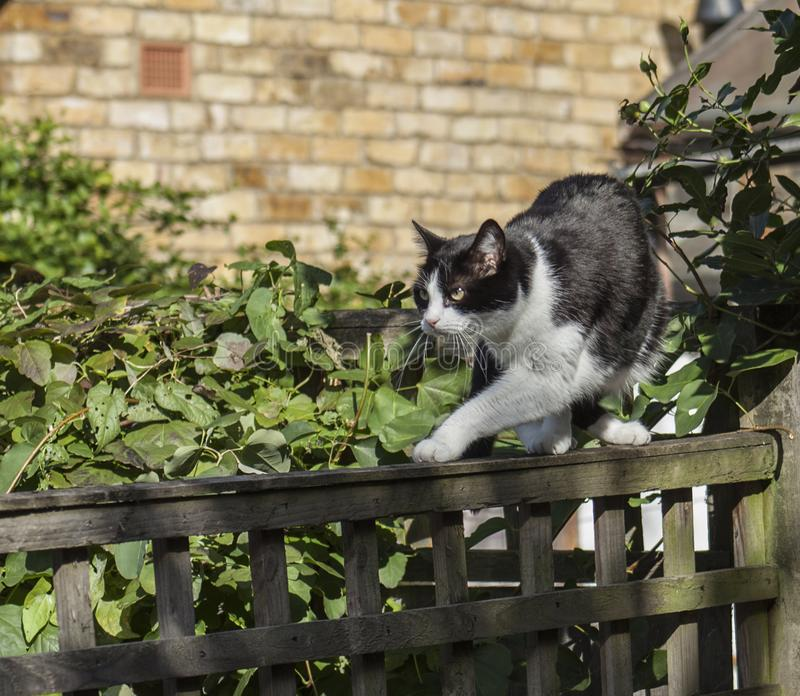 Black and white cat in a garden. royalty free stock images