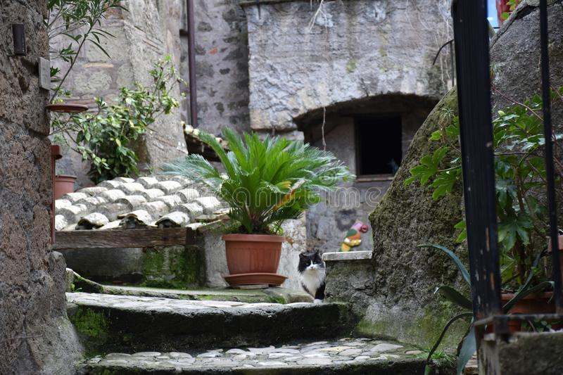 Black and white cat in the historic center. Outdoors felin royalty free stock images