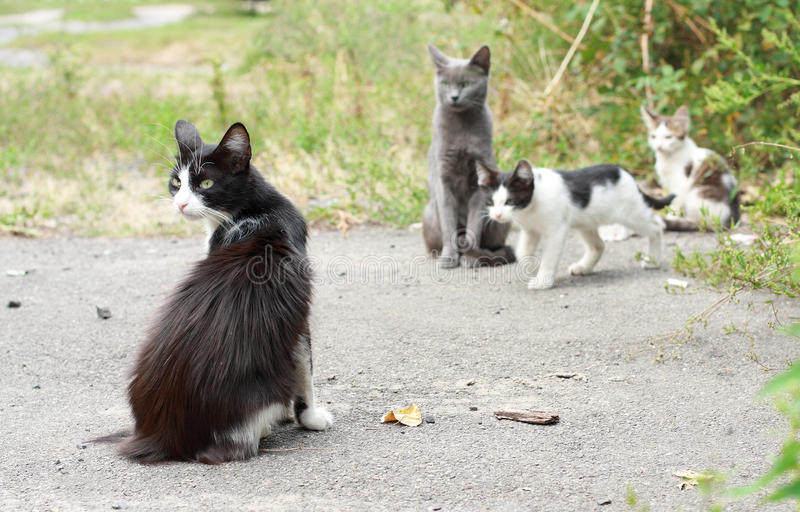 Download Black-and-white Cat And Kittens Stock Image - Image: 16392195