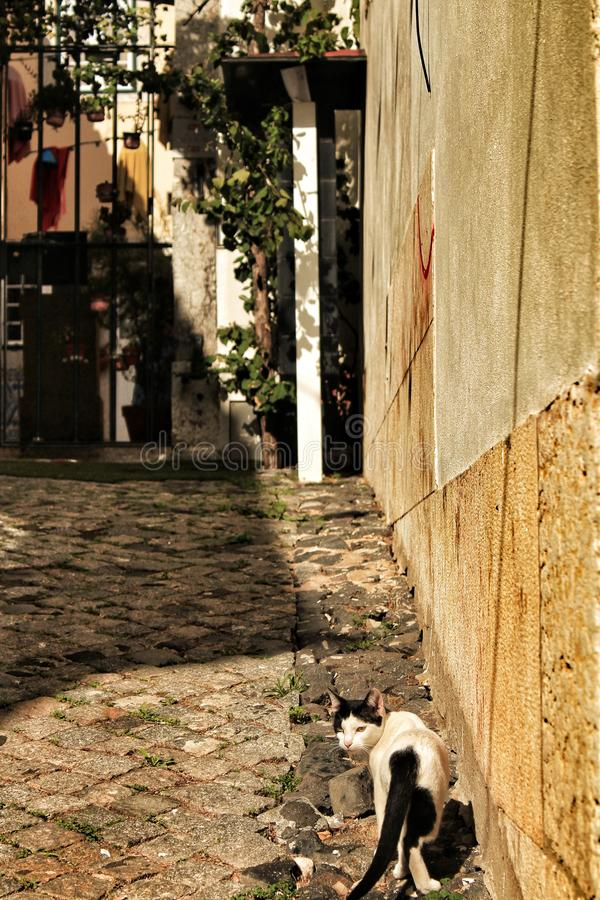 Black and White cat in Lisbon cobblestone street. In Spring royalty free stock photo