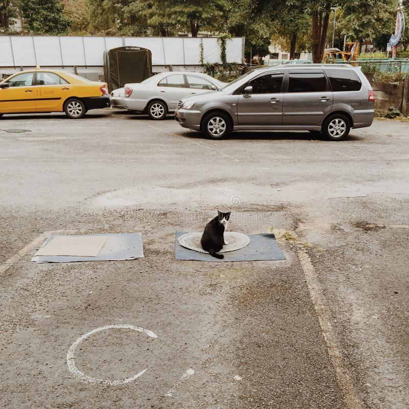 Black and White Cat on the Mat in a Distance of Gray Suv royalty free stock image