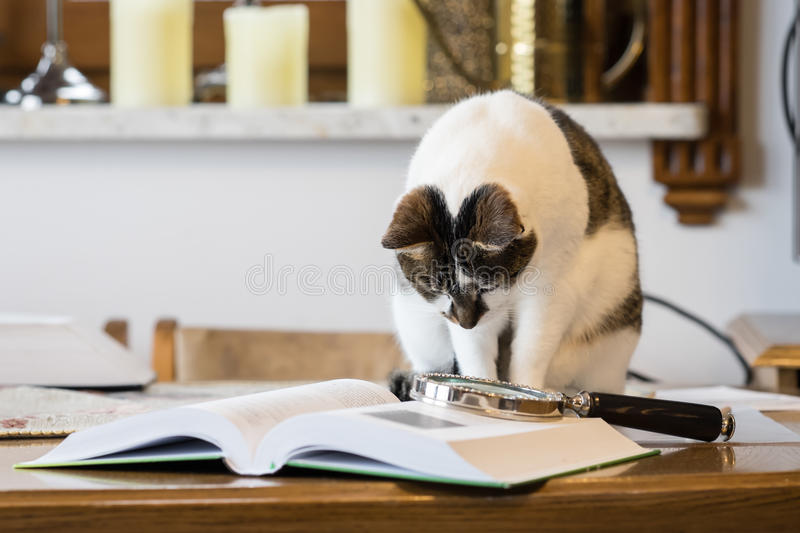 Black and white cat next to a book stock images