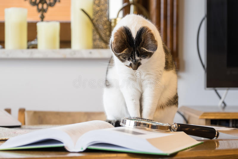 Black and white cat next to a book stock photo