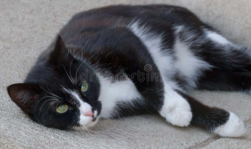 Black and white cat outside. stock images